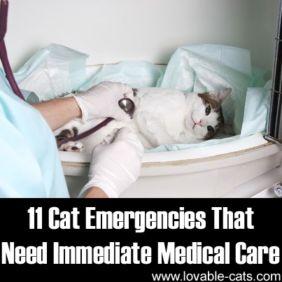 11 Cat Emergencies That Need Immediate Medical Care