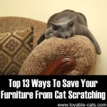 Top 13 Ways To Save Your Furniture From Cat Scratching