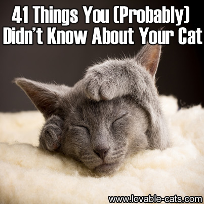 41 Things You (Probably) Didn't Know About Your Cat
