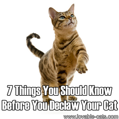 7 Things You Should Know Before You Declaw Your Cat