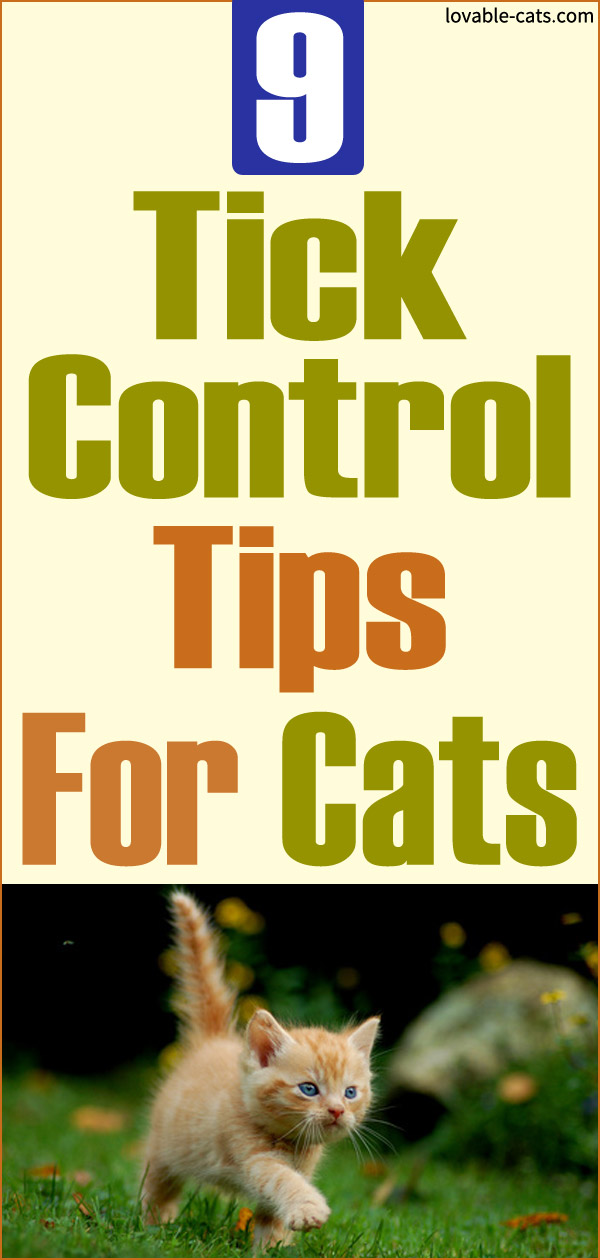 9 Tick Control Tips For Cats