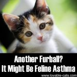 Another Furball? It Might Be Feline Asthma