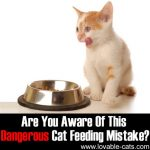 Are You Aware Of This Dangerous Cat Feeding Mistake?