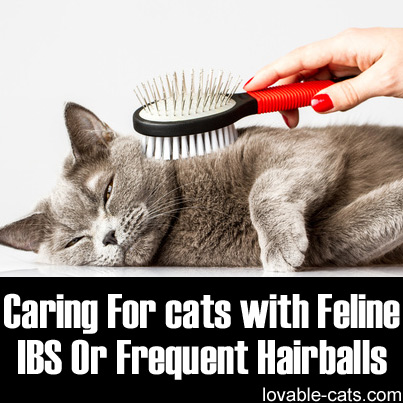 Caring For Cats With Feline IBS Or Frequent Hairballs