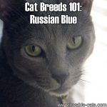 Cat Breeds 101: Russian Blue!