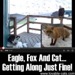 Eagle, Fox And Cat… Getting Along Just Fine!