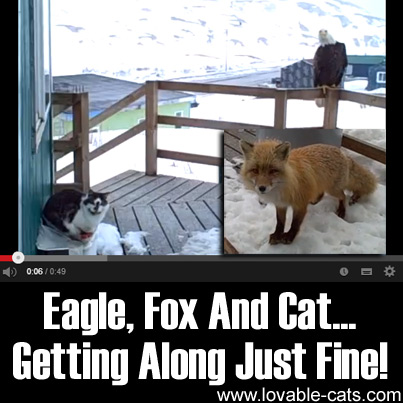 Eagle, Fox And Cat... Getting Along Just Fine!
