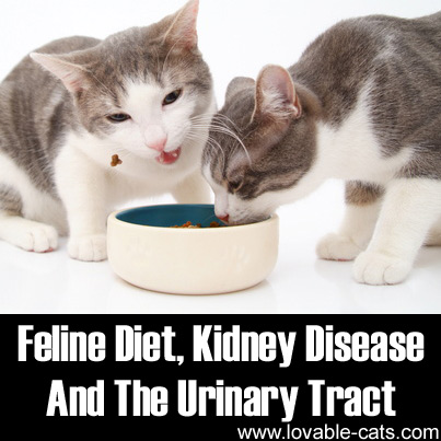 Feline Diet, Kidney Disease And The Urinary Tract