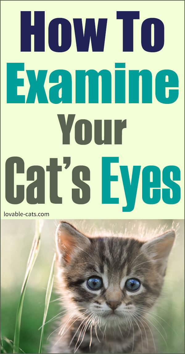 How To Examine Your Cat's Eyes