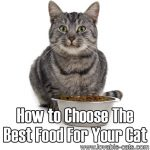 How To Choose The Best Food For Your Cat