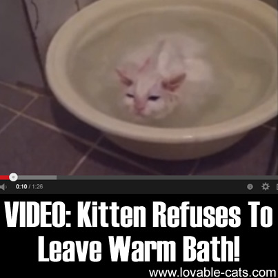 how to give bath to kitten