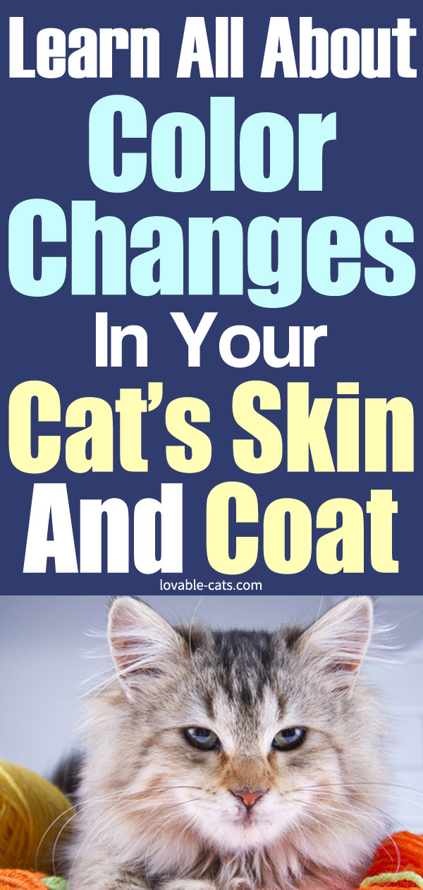 Learn All About Color Changes in Your Cat's Skin and Coat