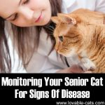 Monitoring Your Senior Cat For Signs Of Disease