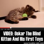 VIDEO: Oskar The Blind Kitten And His First Toys