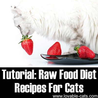 Raw Food Diet Recipes For Cats