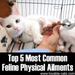 The Five Most Common Feline Physical Ailments
