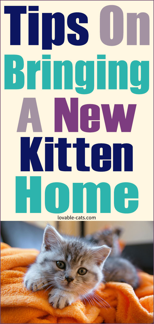 Tips On Bringing A New Kitten Home