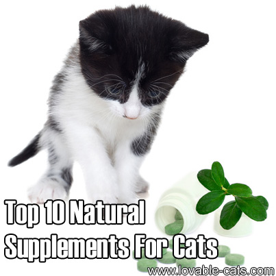 Top 10 Natural Supplements For Cats