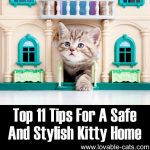 Top 11 Tips For A Safe And Stylish Kitty Home