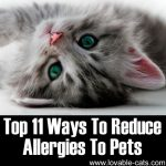 Top 11 Ways To Reduce Pet Allergies