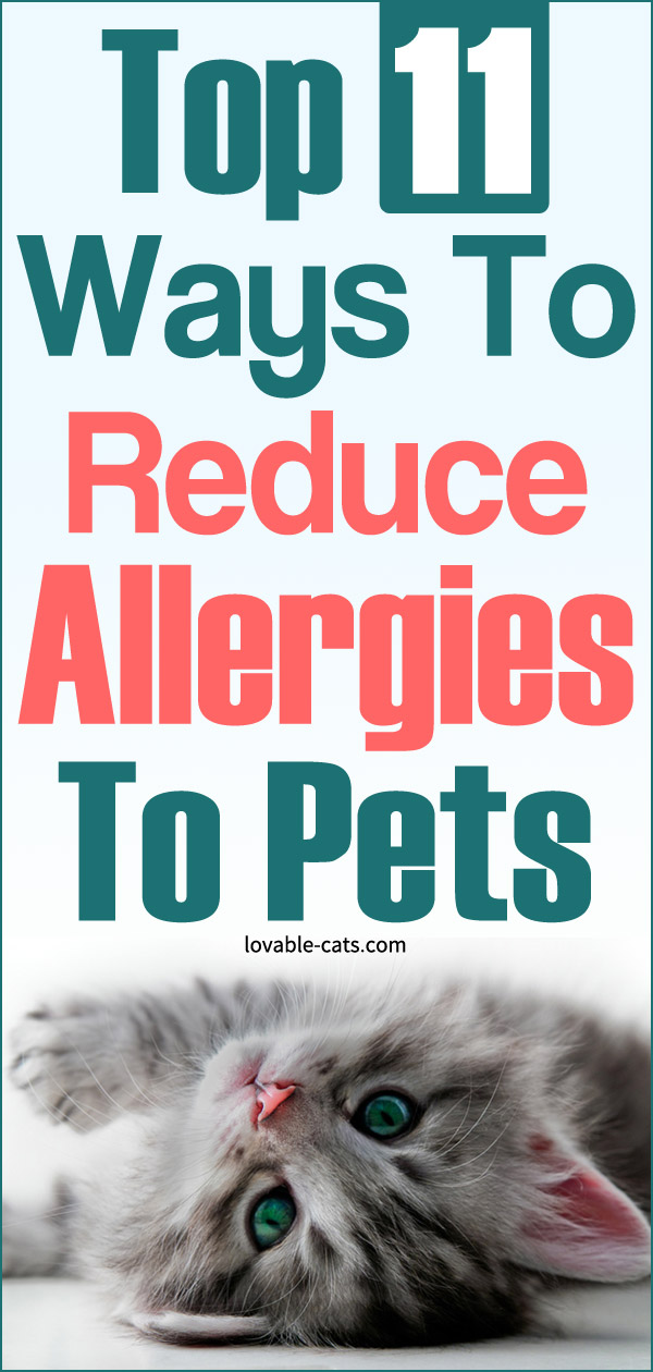 Top 11 Ways To Reduce Allergies To Pets
