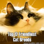 Top 12 Friendliest Cat Breeds