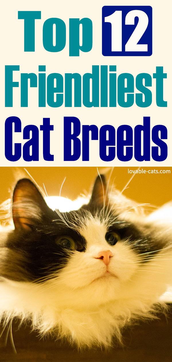 Top 12 Friendliest Cat Breeds
