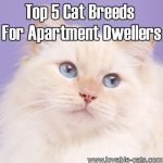 Top 5 Cat Breeds For Apartment Dwellers