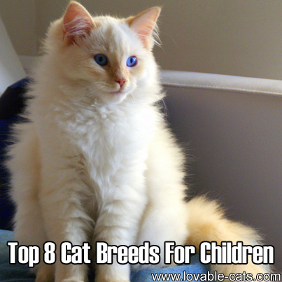 Top 8 Cat Breeds For Children