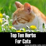 Top Ten Herbs For Cats