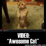 "VIDEO: ""Awesome Cat"""