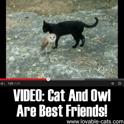 VIDEO: Cat And Owl Are Best Friends!