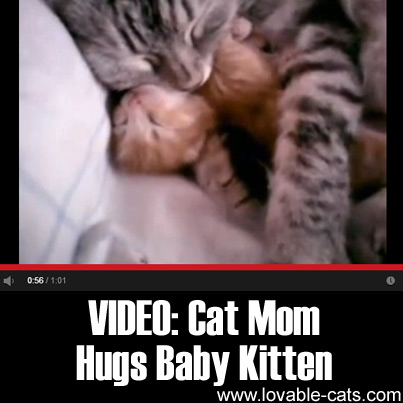 VIDEO: Cat Mom Hugs Baby Kitten