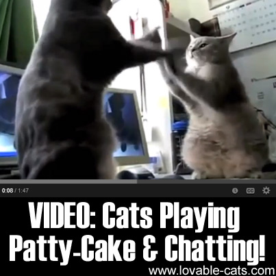 VIDEO: Cats Playing Patty-cake & Chatting