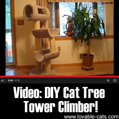 VIDEO - DIY Cat Tree Tower Climber