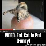 VIDEO: Fat Cat In Pot (Funny)