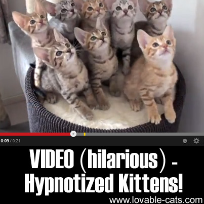 VIDEO (Hilarious): Hypnotized Kittens!