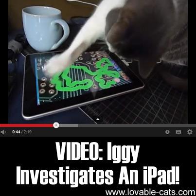 VIDEO: Iggy Investigates An iPad!