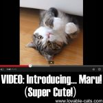 VIDEO: Introducing… Maru! (Super Cute!)