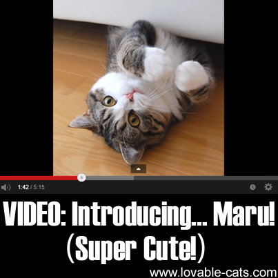 VIDEO: Introducing... Maru! (Super Cute!)