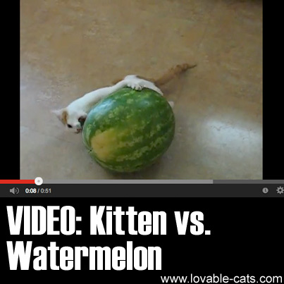 VIDEO: Kitten vs. Watermelon