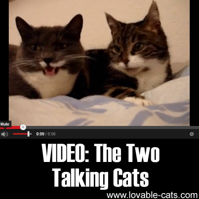 VIDEO: The Two Talking Cats