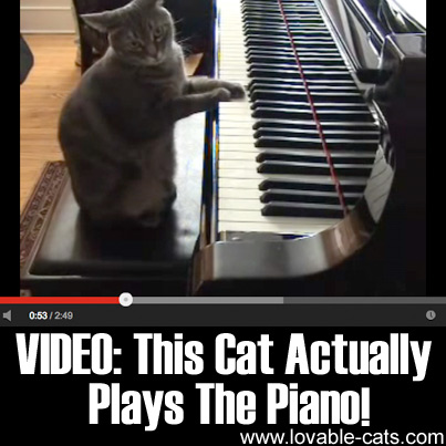VIDEO - This Cat Actually Plays The Piano!