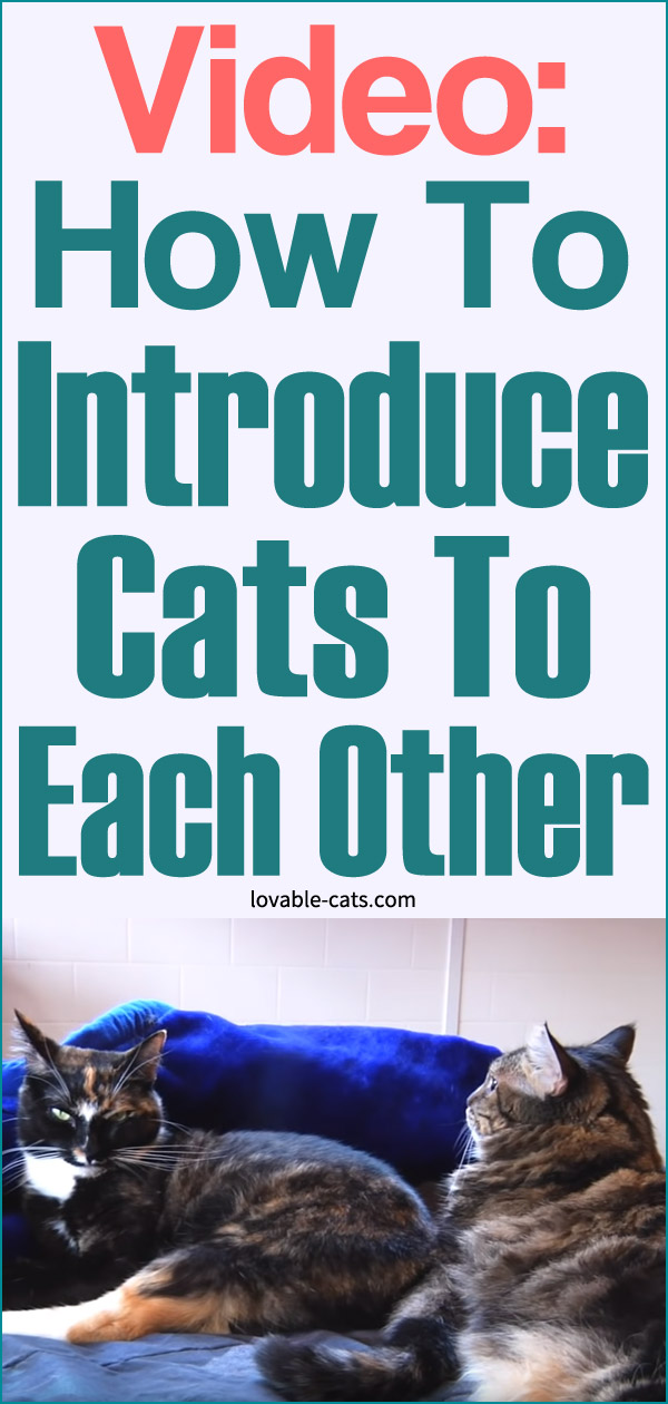 Video - How To Introduce Cats To Each Other