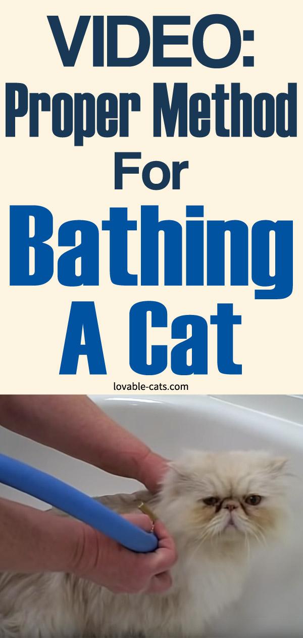 Video - Proper Method For Bathing A Cat