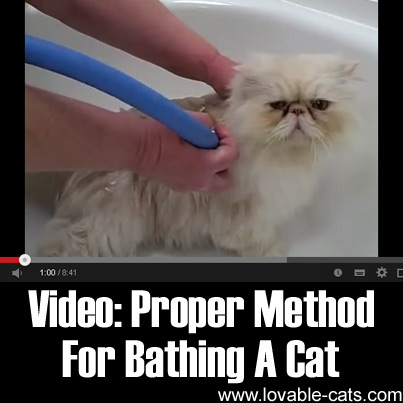Video: Proper Method For Bathing A Cat