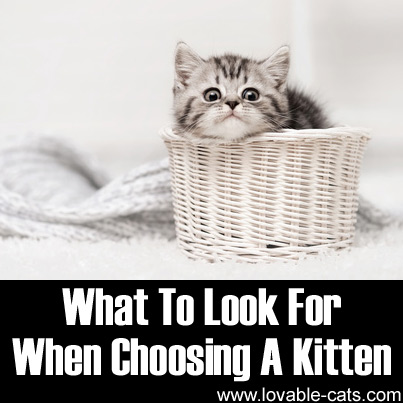 What To Look For When Choosing A Kitten