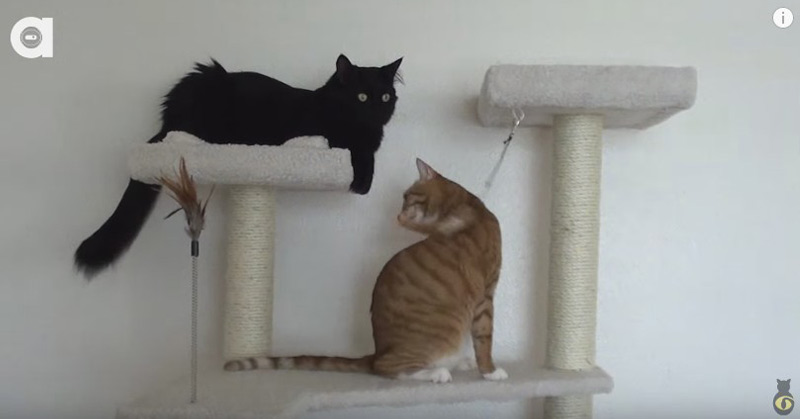 2 Cats 1 Cat Tree