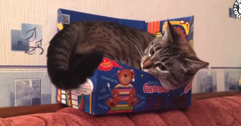 Cats In Boxes - Cats VS Boxes Funny Pet Compilation