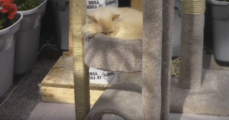 How To Build A Medium-Sized Cat Tree With 2 Beds And A Tunnel